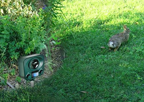 Bird-X Solar Yard Gard Electronic unwanted of your yard sound-waves